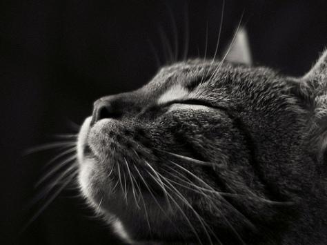 gatto-giada