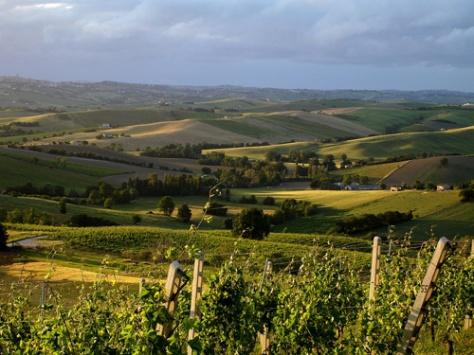 colline-delle-Marche1