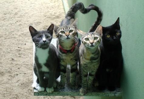 gatti-randagi-foto