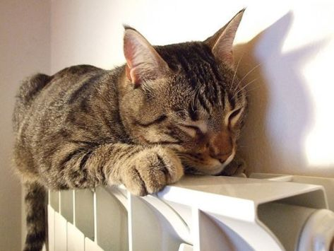 gatto_764054